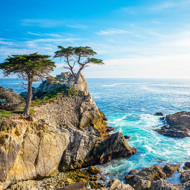Lone cypress tree on cliffs of Pebble Beach, CA